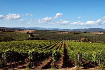 piedmont red wines - Castello di Gabbiano vineyards