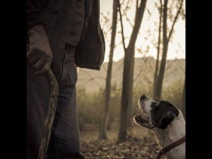 truffle hunting dog with owner