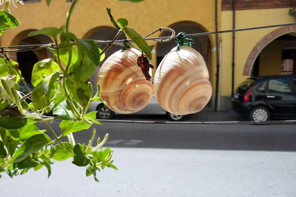 Cherasco snails