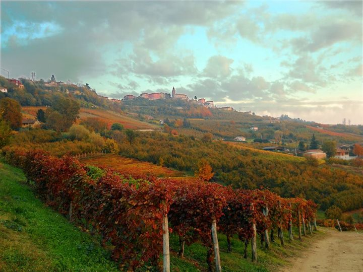 Wine tasting in Barolo - photo of rainbow colored vineyards during the Fall season