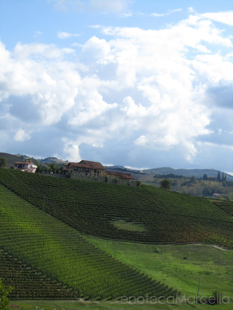 Pecchenino Dogliani winery & vineyards in Piedmont