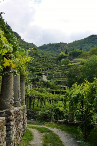 Terraced vineyard in Carema - Susa Valley, Piedmont - The Royal Road of Torinese Wines