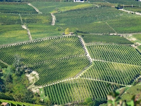 Piedmont red wines - rolling hills and vineyards