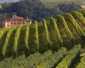Barolo, Piedmont hills in the Langhe