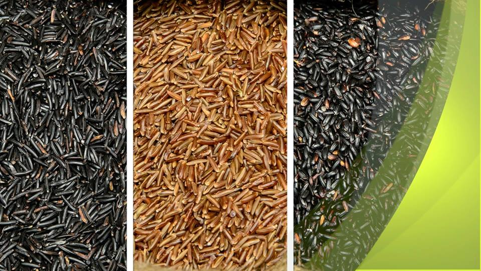 different typoes of rice from Vercelli, Piedmont