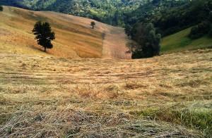 fresh cut hay fields in Alta Langhe Piedmont