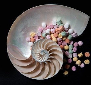 Pastiglie Leone sweets and shell exhibit