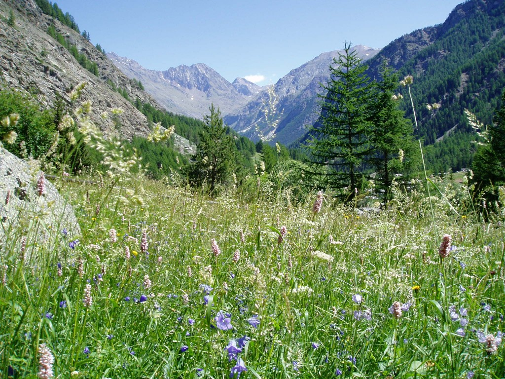 Walk in Gran Paradiso National Park  mountains and wildflowers