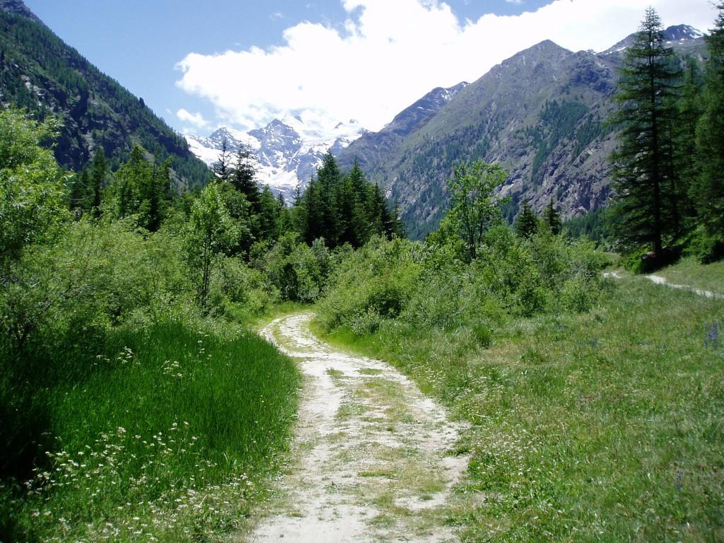 Nature walk in Gran Paradiso
