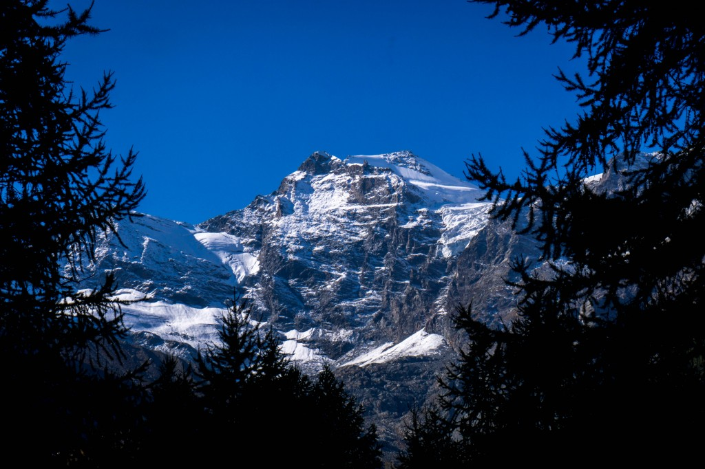 Gran Paradiso National Park snow capped mountains with alpine trees
