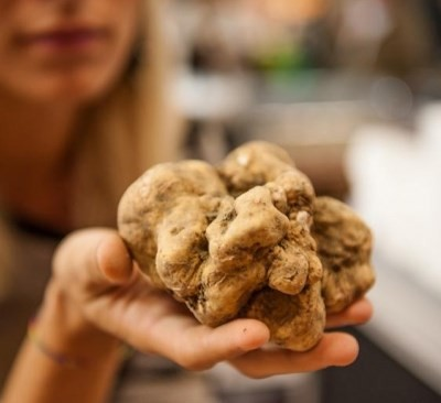 Alba White Truffle in hand of lady