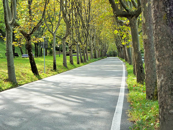 Rivoli - road lined with trees