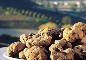 foodies guide to piedmont with the Alba Truffle Festival - white truffles with view of the countryside