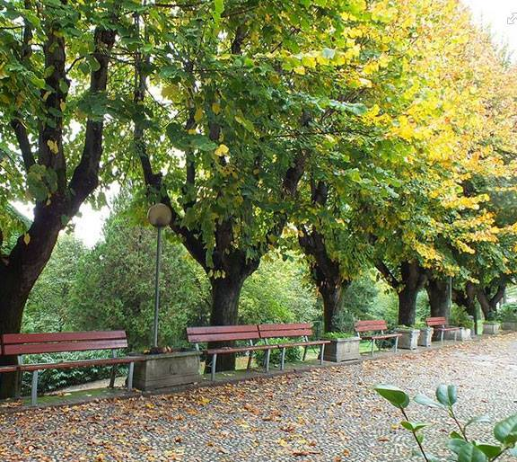 gardens and parks in Turin. Benches in the park lined with trees