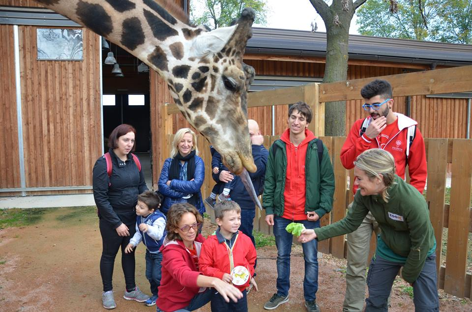 activities for families in turin, the Zoom Torino zoo - kids with giraffe