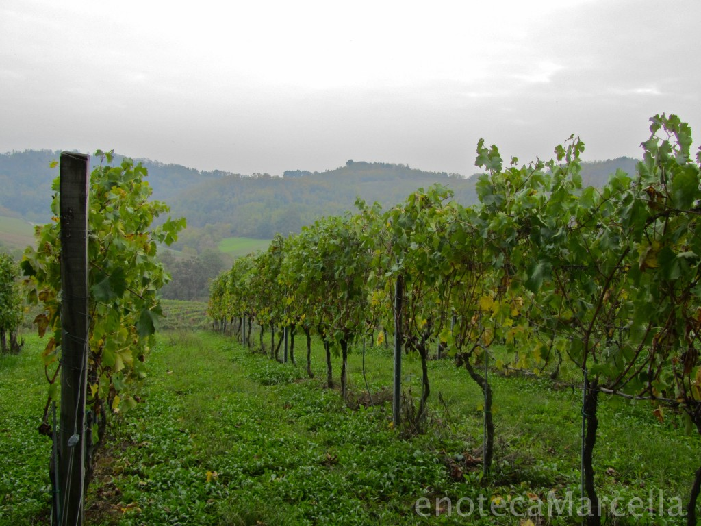 Tortona Piemonte wine vineyards - a wine region in piedmont