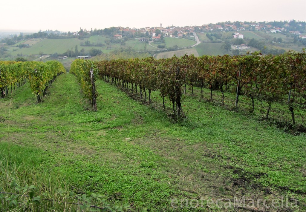 Piedmont wine vineyards with village in distance in Tortona Piedmont, a wine region in Piedmont