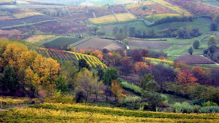 Asti vineyards in the fall