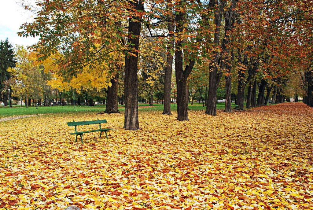 Monferrato Casale park with bench surrounding by trees and colorful leaves