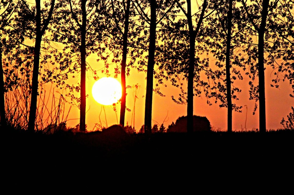 Monferrato - Casale sunset amongst the trees