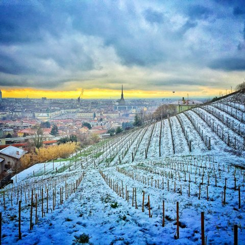Villa della Regina wine vineyards with Turin skyline by Luca Balbiano