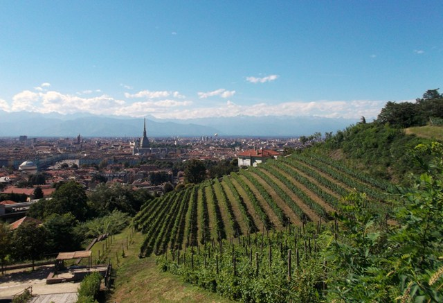 Villa della Regina wine vineyards with Turin city view in background
