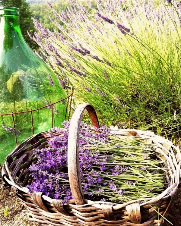 Agriturismo Verdita lavendar basket at their lavender farm in Piedmont