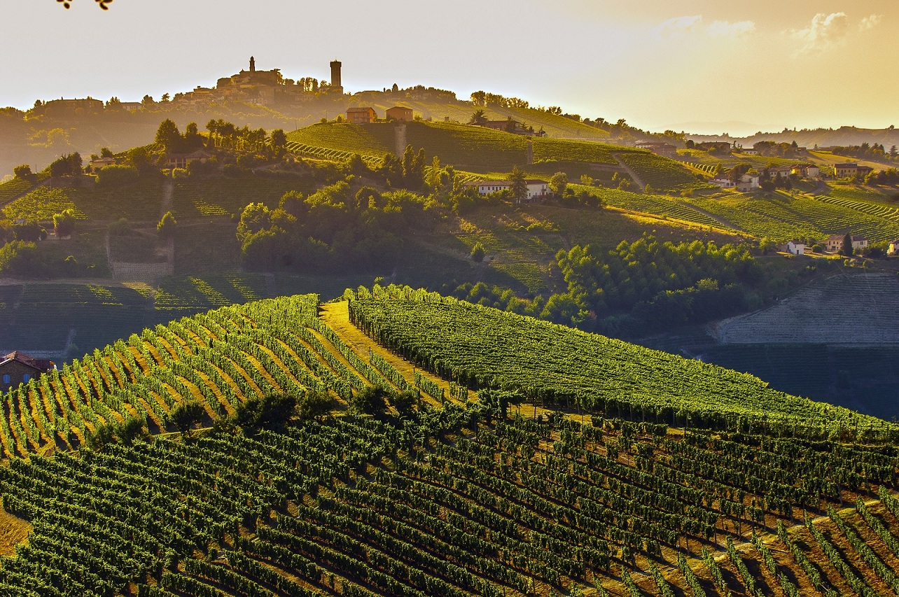 Piedmont landscape with vineyards and hilltop village in the background