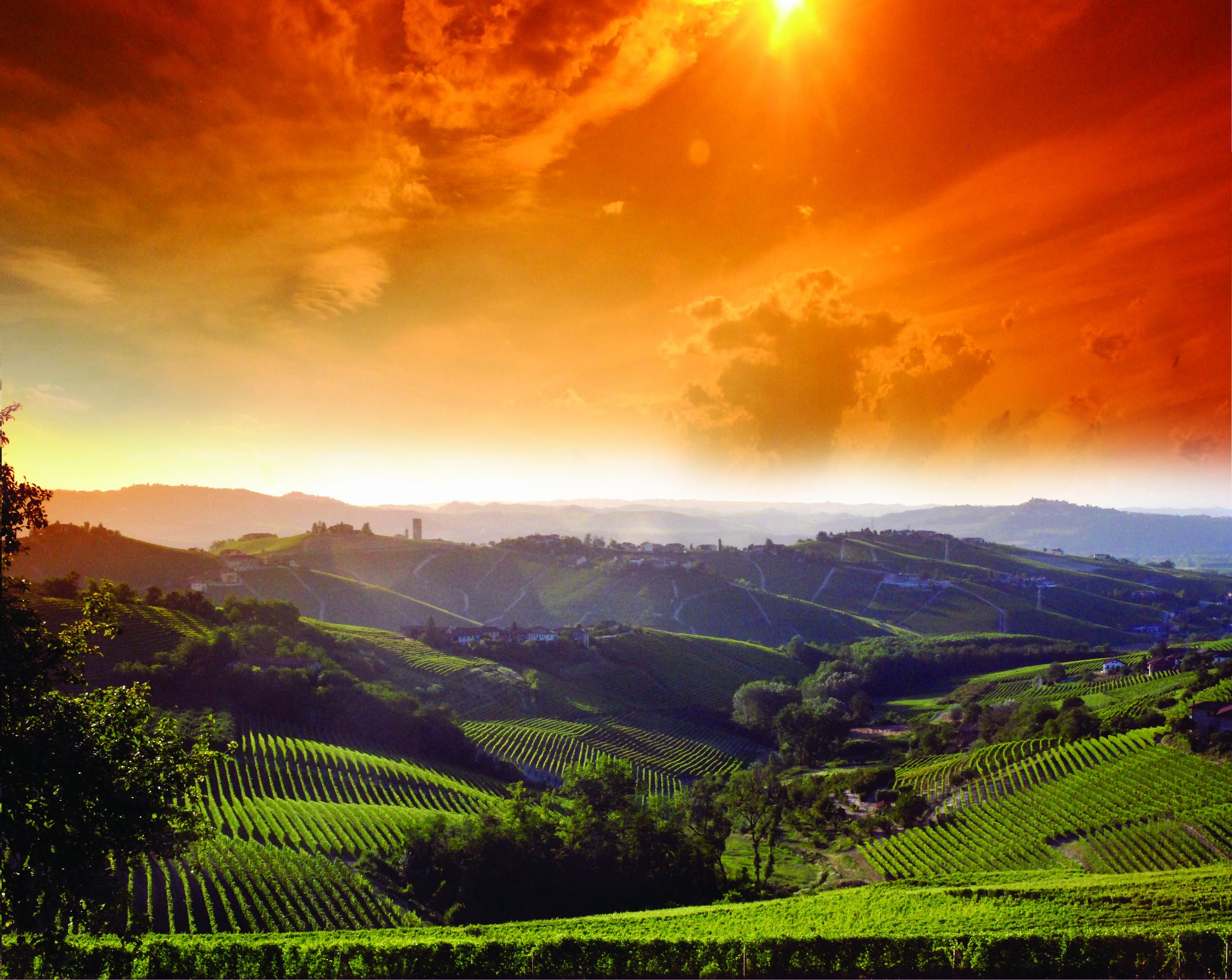 The Langhe Under the Sun with rolling hills covered in wine vineyards