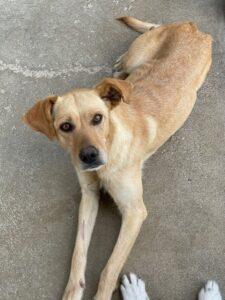 Amici di Zampa dog and cat refuge in Alba - dog Cora at the kennel