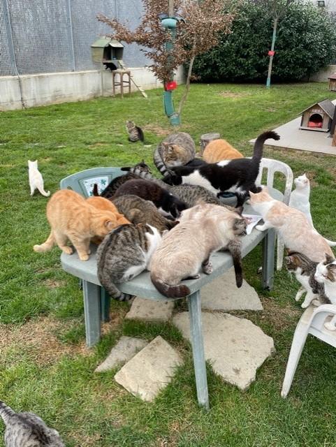 Amici di Zampa Alba group of cats outside in the garden