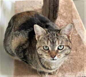 Amici di Zampa dog and cat refuge in Alba - cat indoors waiting for adoption