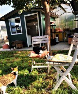 Amici di Zampa dog and cat refuge in Alba - cats sitting around garden